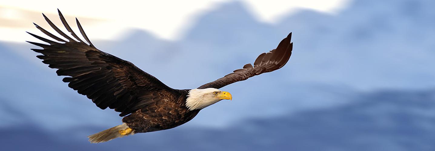 eagle1436X500